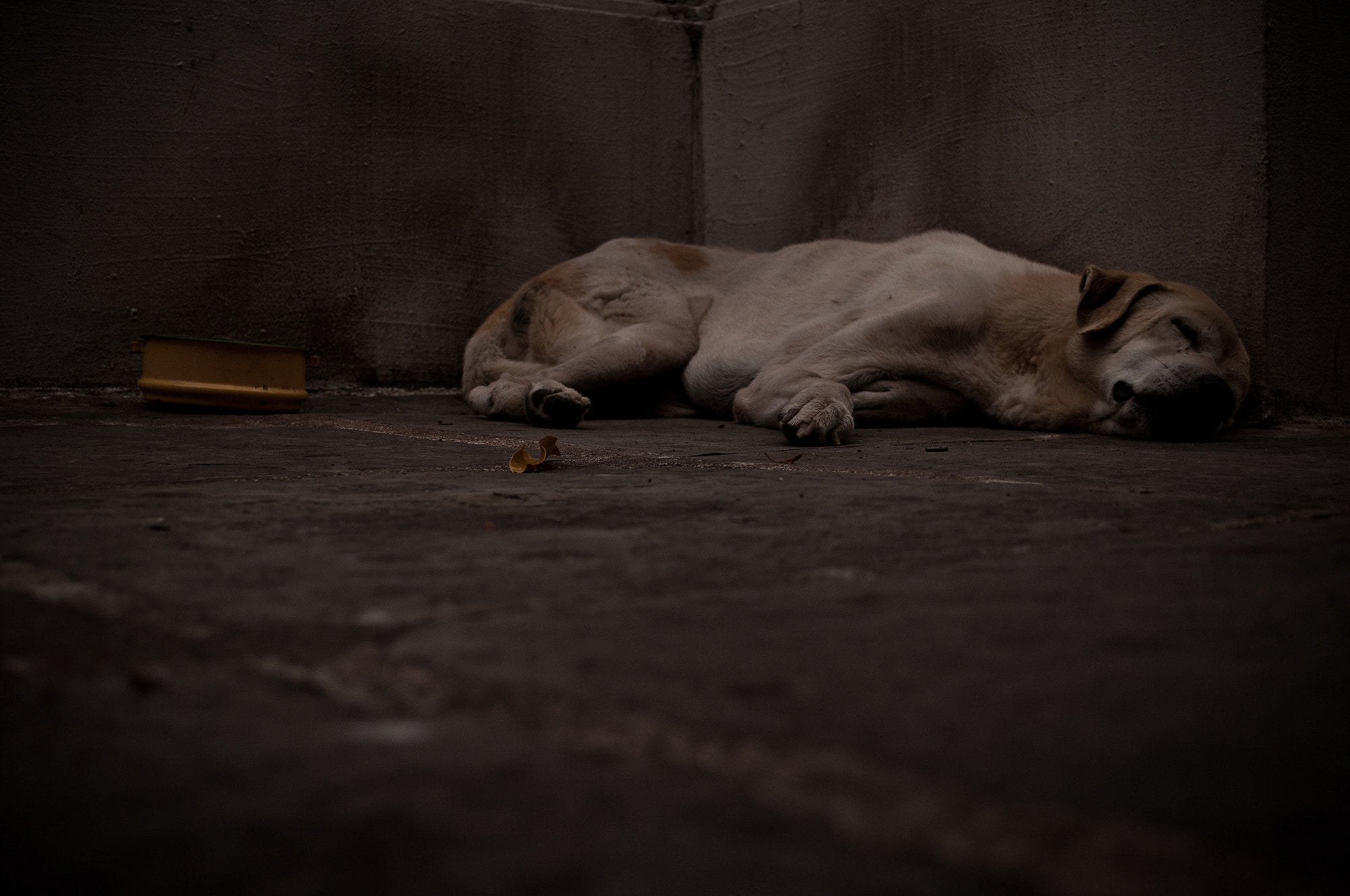 Photograph Dog Sleep by Nakamura Aki on 500px