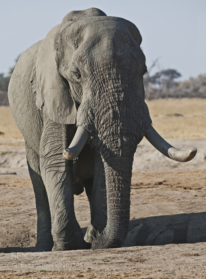 Taken at Kennedy 2 waterhole, Hwange National Park, Zimbabwe, 1st September 2011