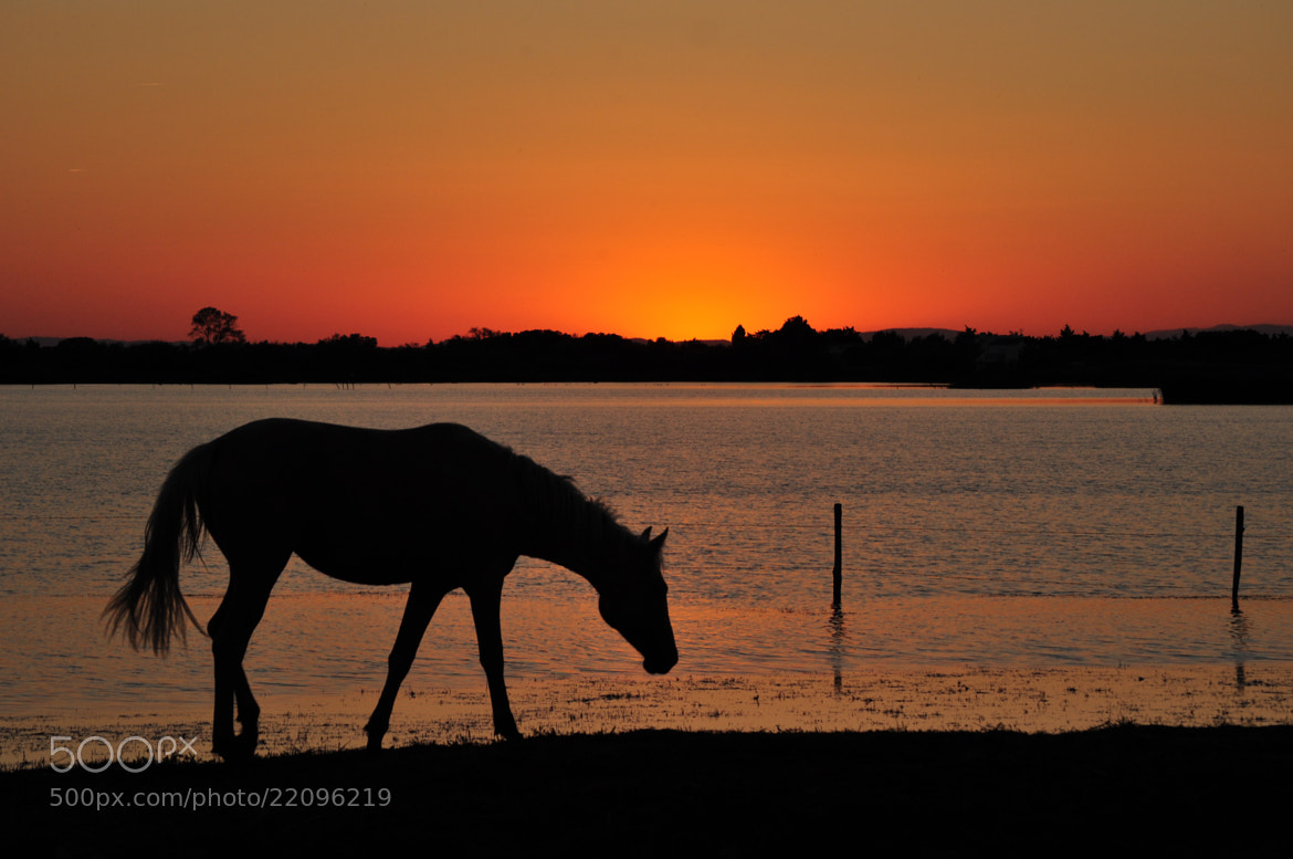 Photograph Camargue Sunset by Phil Scarlett on 500px