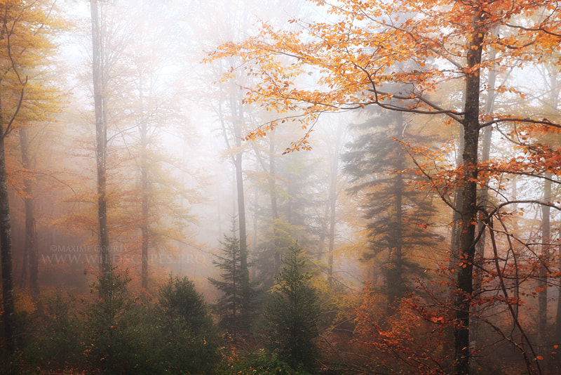 Photograph Autumn fog by Maxime Courty on 500px