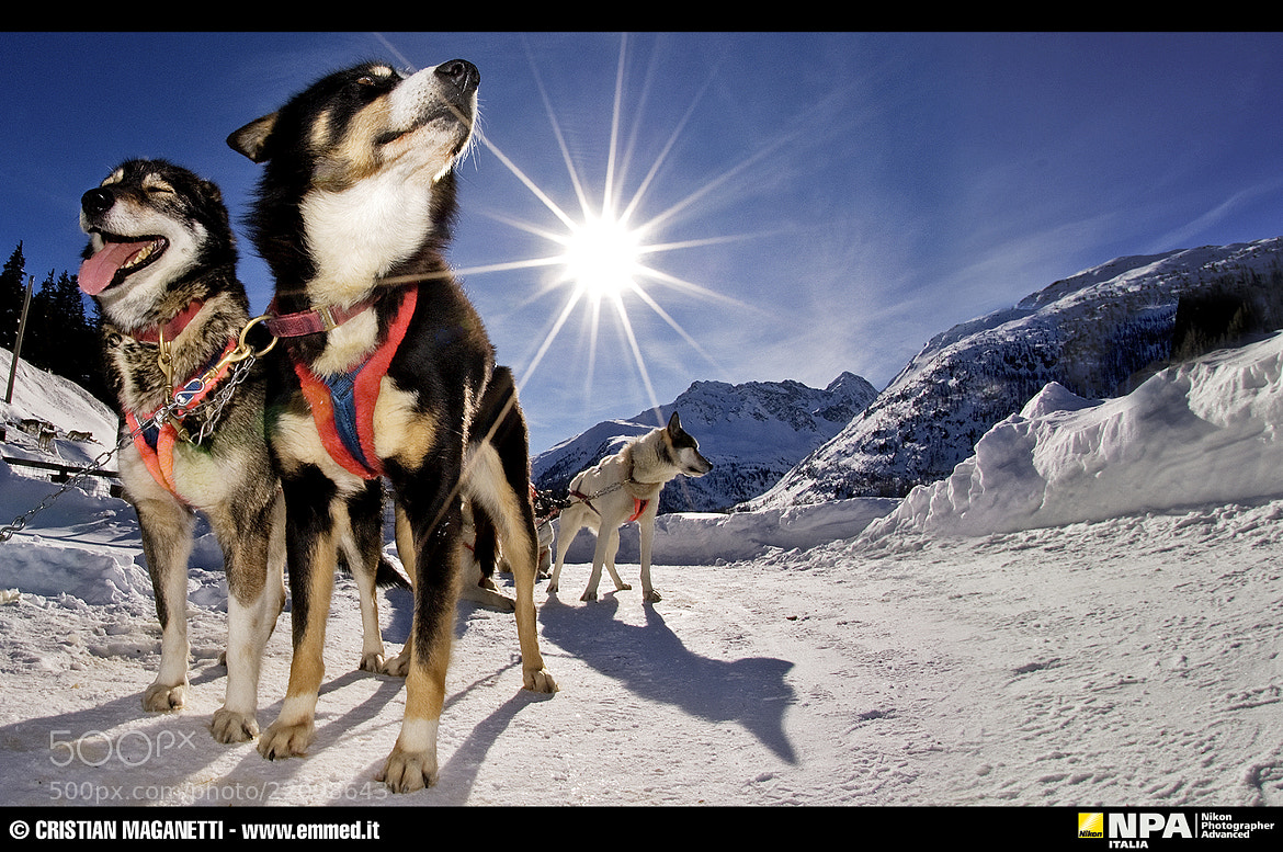 Photograph Husky Village - Arnoga (SO) Italy by Cristian Maganetti on 500px