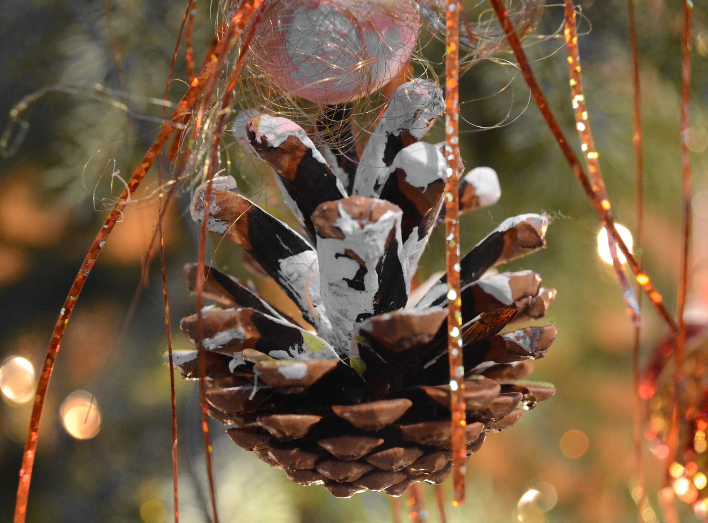 Photograph pinecone by Dennis Schumann on 500px