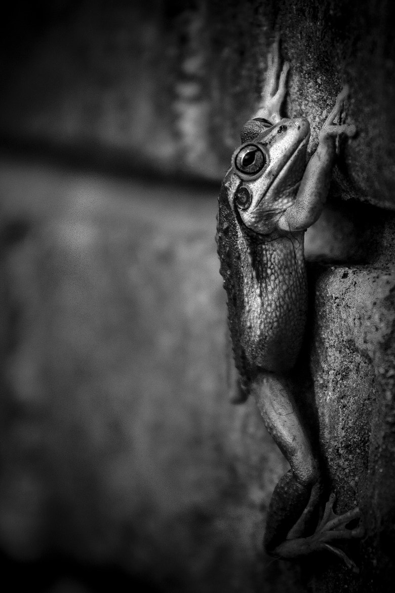 Photograph Frog on the Wall by Ross Van der Watt on 500px