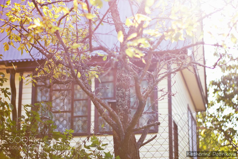 Photograph outside of the city by Katherine Dobrikova on 500px