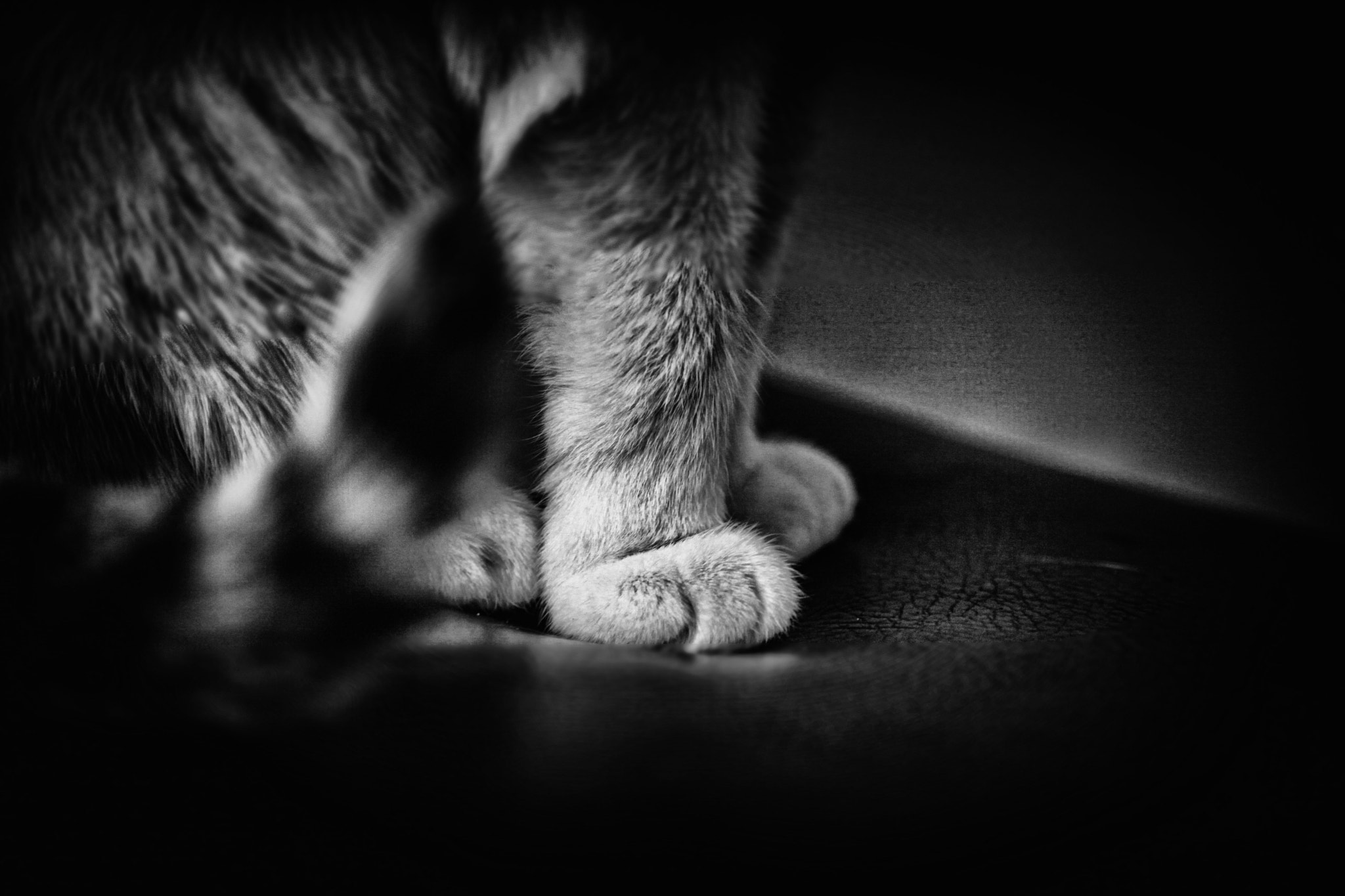 Photograph *the paw secret... * by Schattenlichterloh Photography on 500px