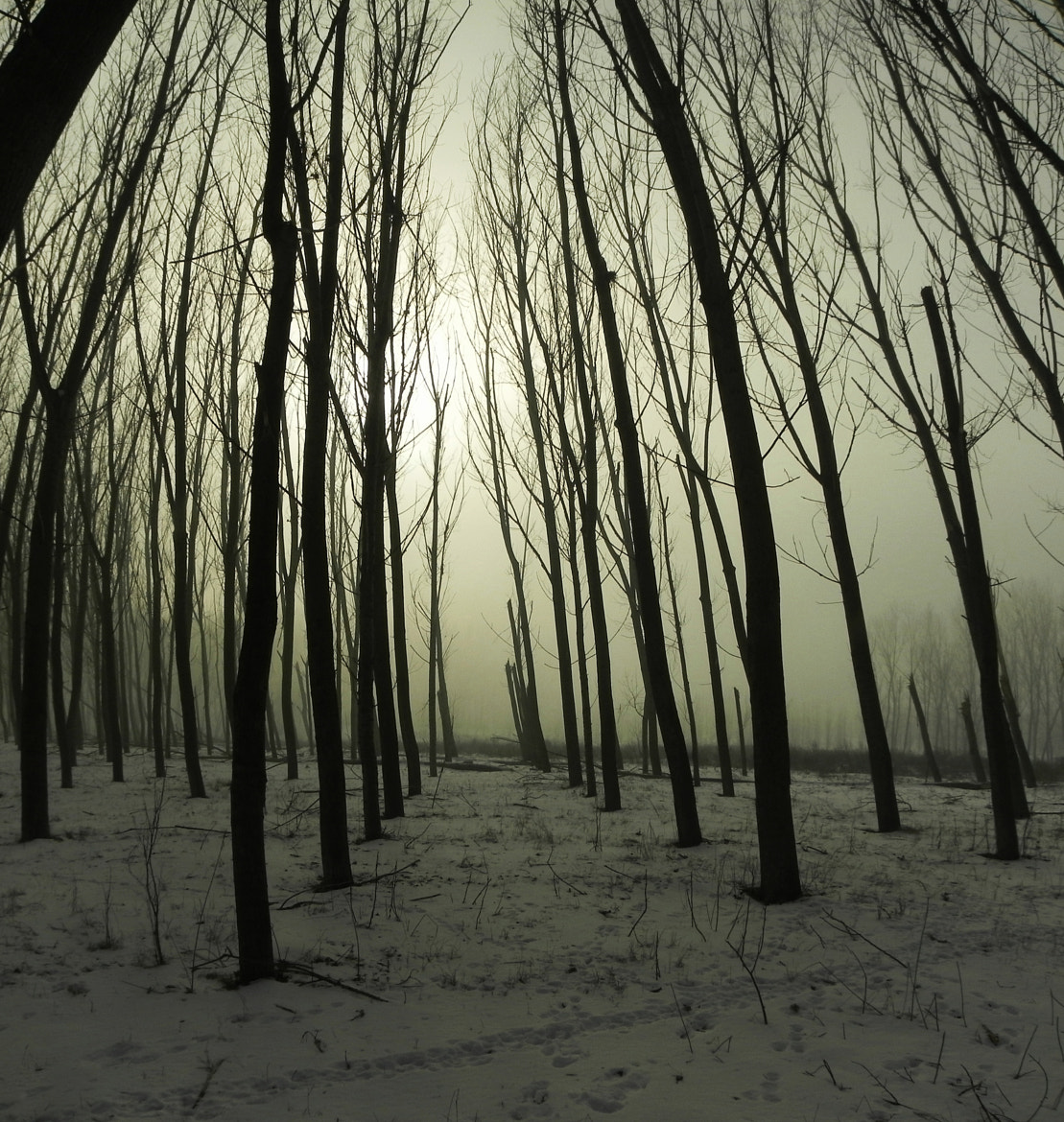 Photograph Creepy Forest by Cosmin Barbu on 500px