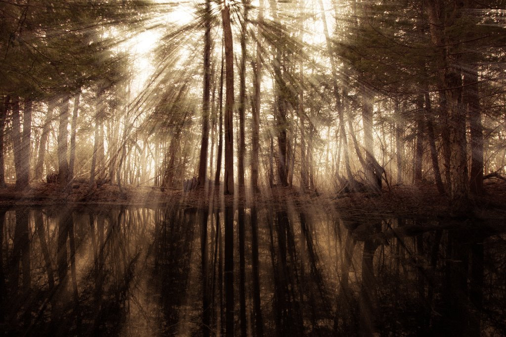 Photograph DEEP FOREST by RYAN STUDIO on 500px
