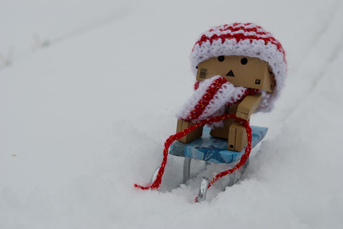 Photograph Danbo sledding by Natalia Tsaplina on 500px