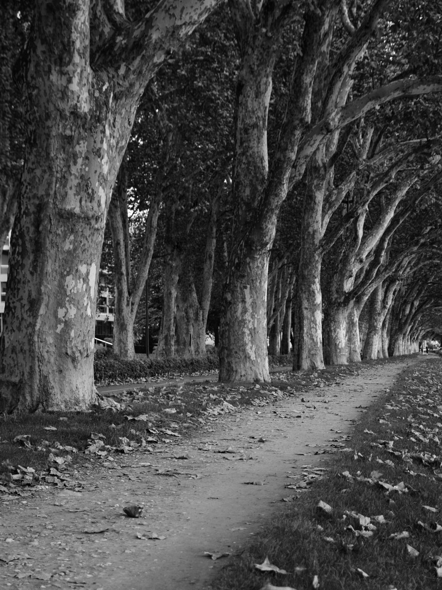 Photograph Annecy trees by ketbag on 500px