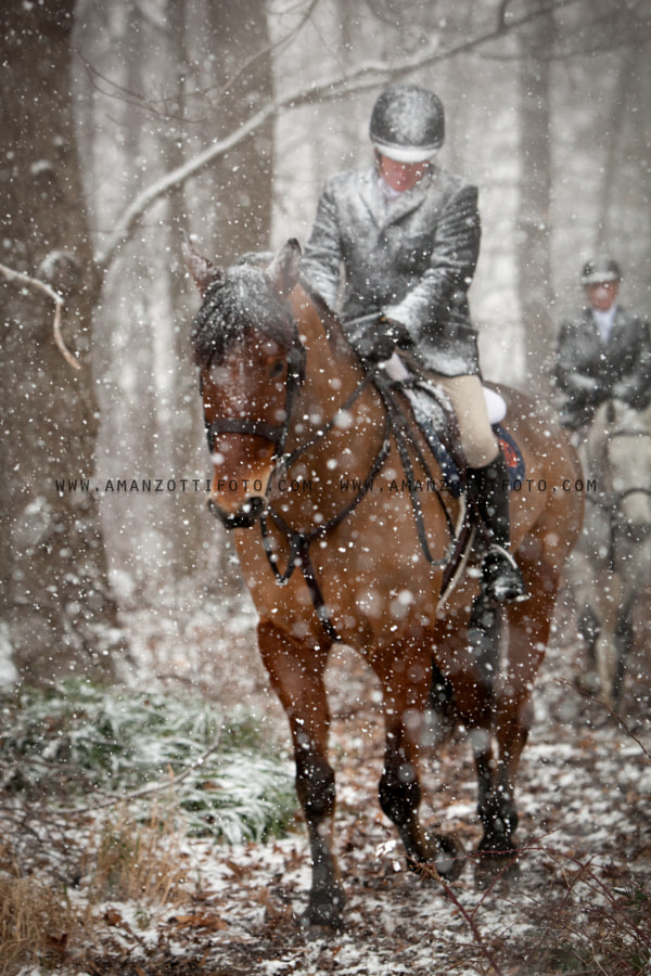 fox hunter in the PA Cheshire