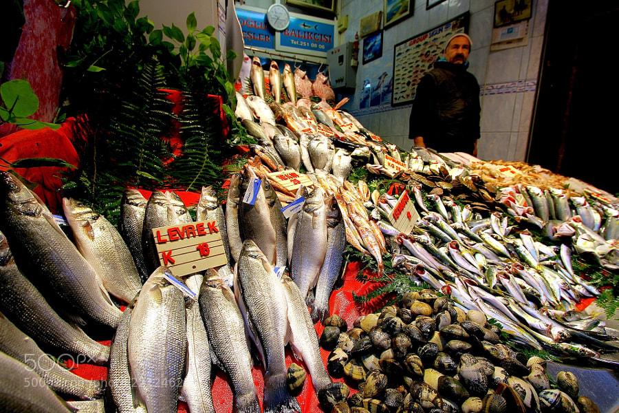Fish by Michael Hafner (Michael-Hafner)) on 500px.com