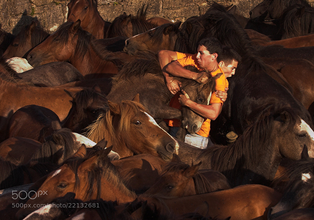 Photograph Rapa das bestas by Javier Abad on 500px