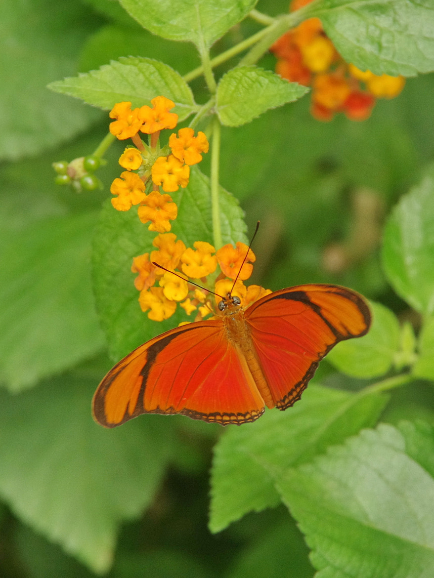Photograph Butterfly 4 by Marc LEVASSEUR on 500px