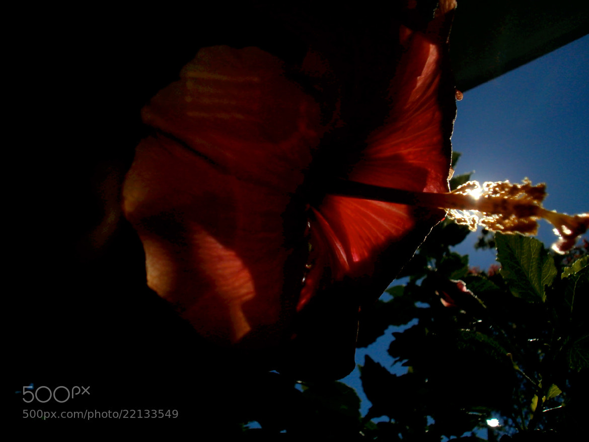 Photograph A flower in the dark by gabriel guirola on 500px