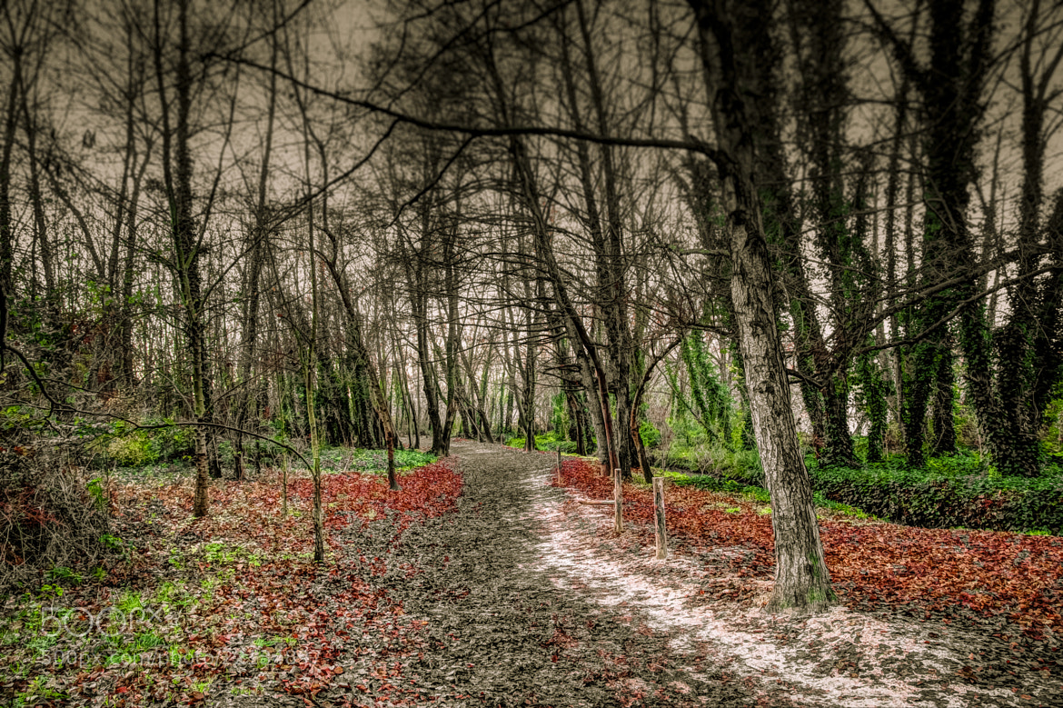 Photograph A path in the forest by Ricard Zamora on 500px