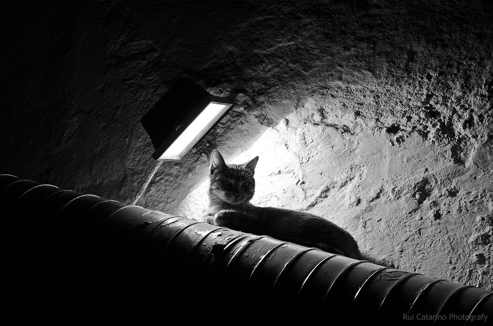 Photograph Cat heater by Rui Catarino on 500px