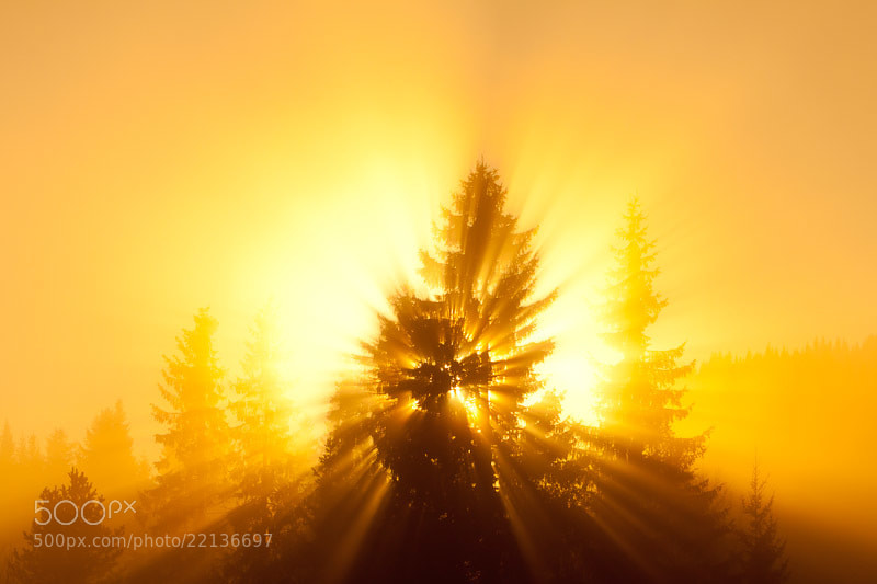 Photograph The golden tree by Tor Atle Kleven on 500px