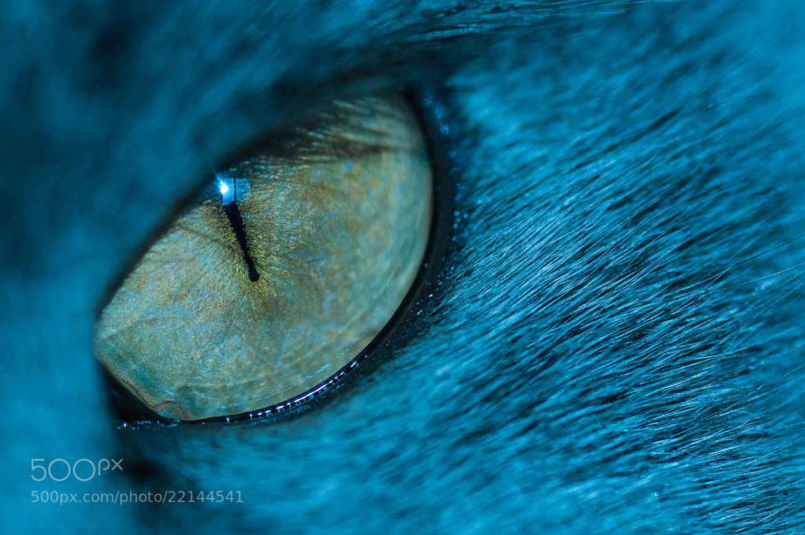 Photograph Cat's Eye by Alan Story on 500px