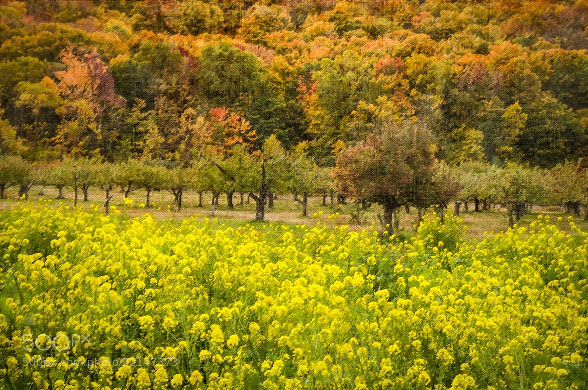 Photograph Fall Flowers under the Escarpment by Ort Baldauf on 500px