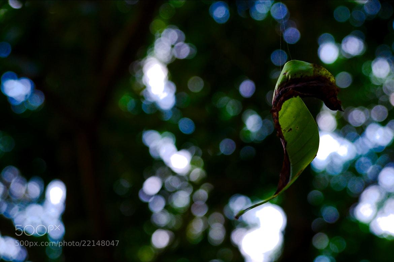 Photograph spider leaf by Greg Orlov on 500px
