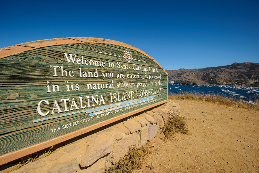 Welcome to Catalina