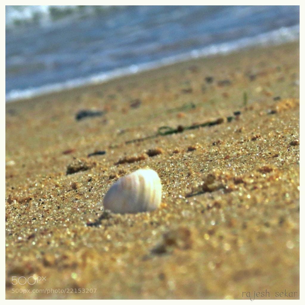 Photograph Sea shell by Rajesh Sekar on 500px