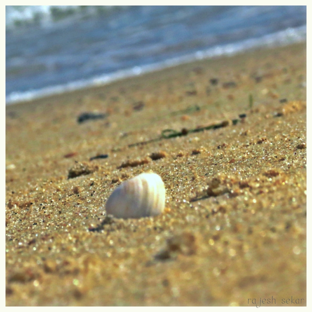 Photograph Sea shell by Rajesh Sekar on 500px