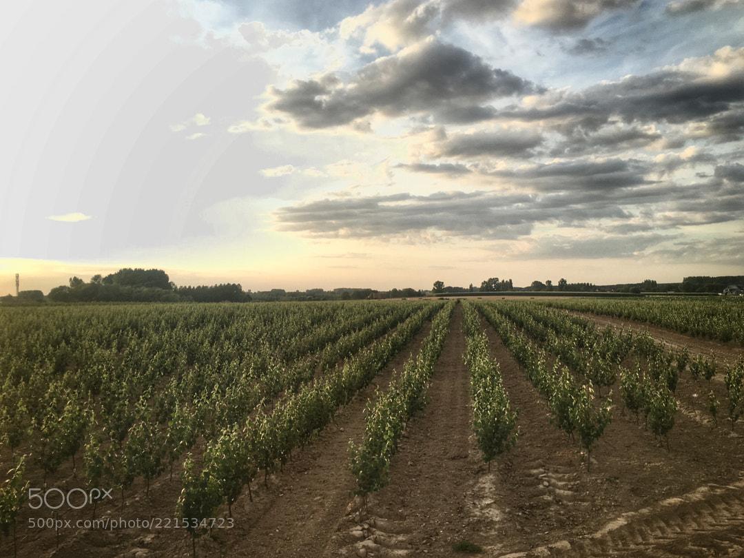 Fields in my hometown