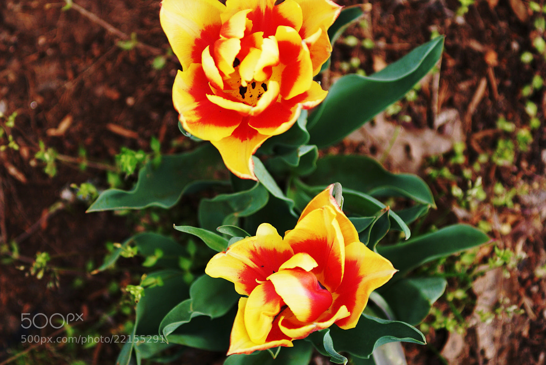 Photograph Fiery Flowers by Devyn Springer on 500px