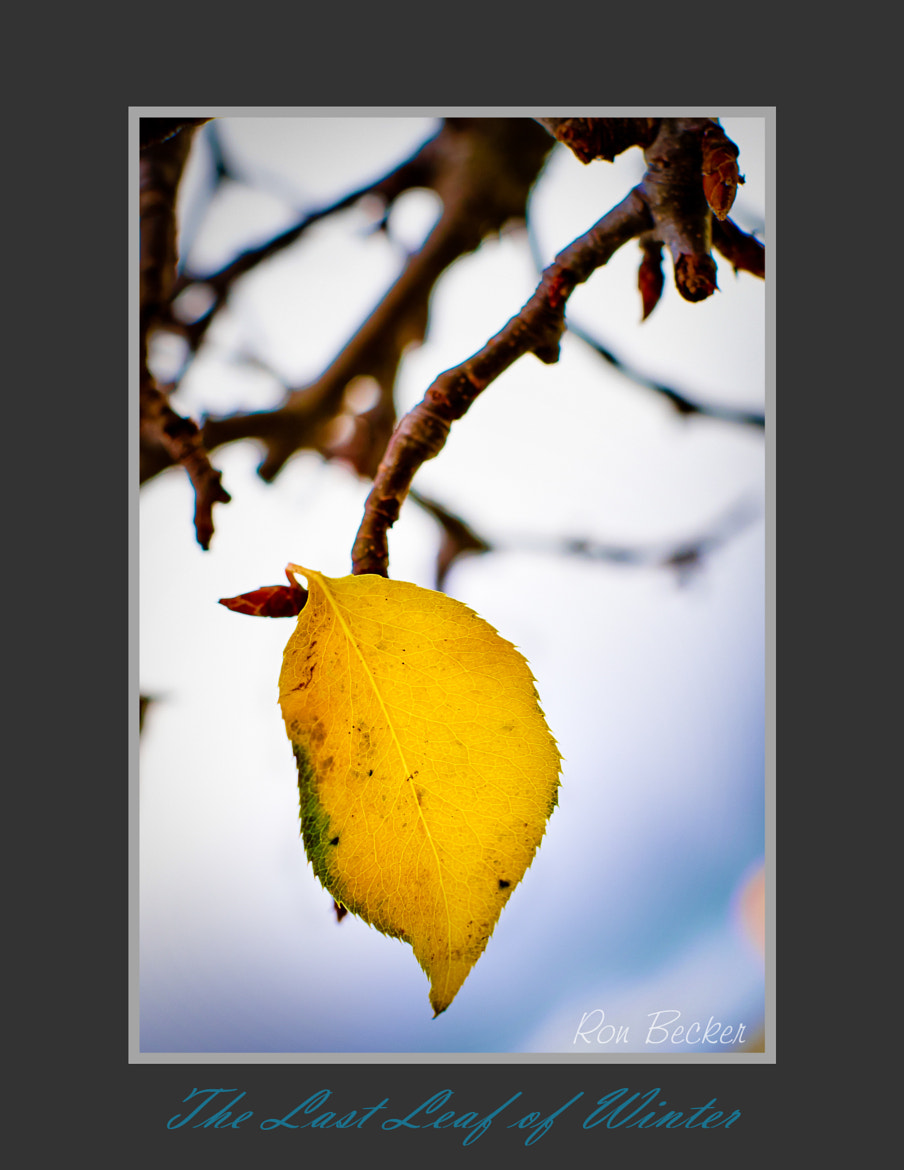Photograph Last Leaf of Winter by Ron Becker on 500px