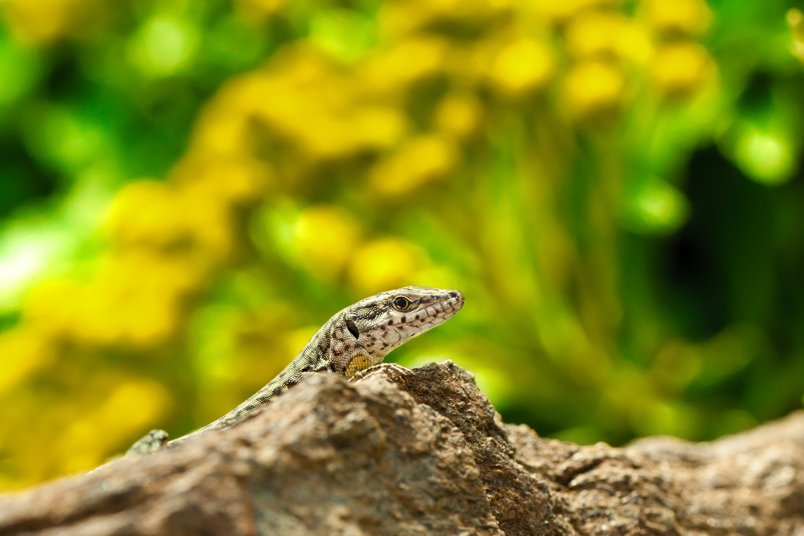 Photograph Sunbathing by Andres Gutierrez on 500px
