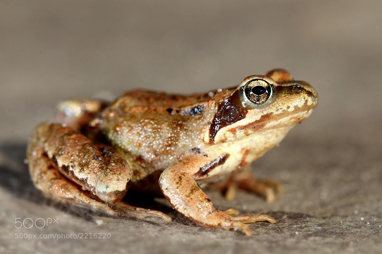 Photograph frogger by Paco de la Luz on 500px