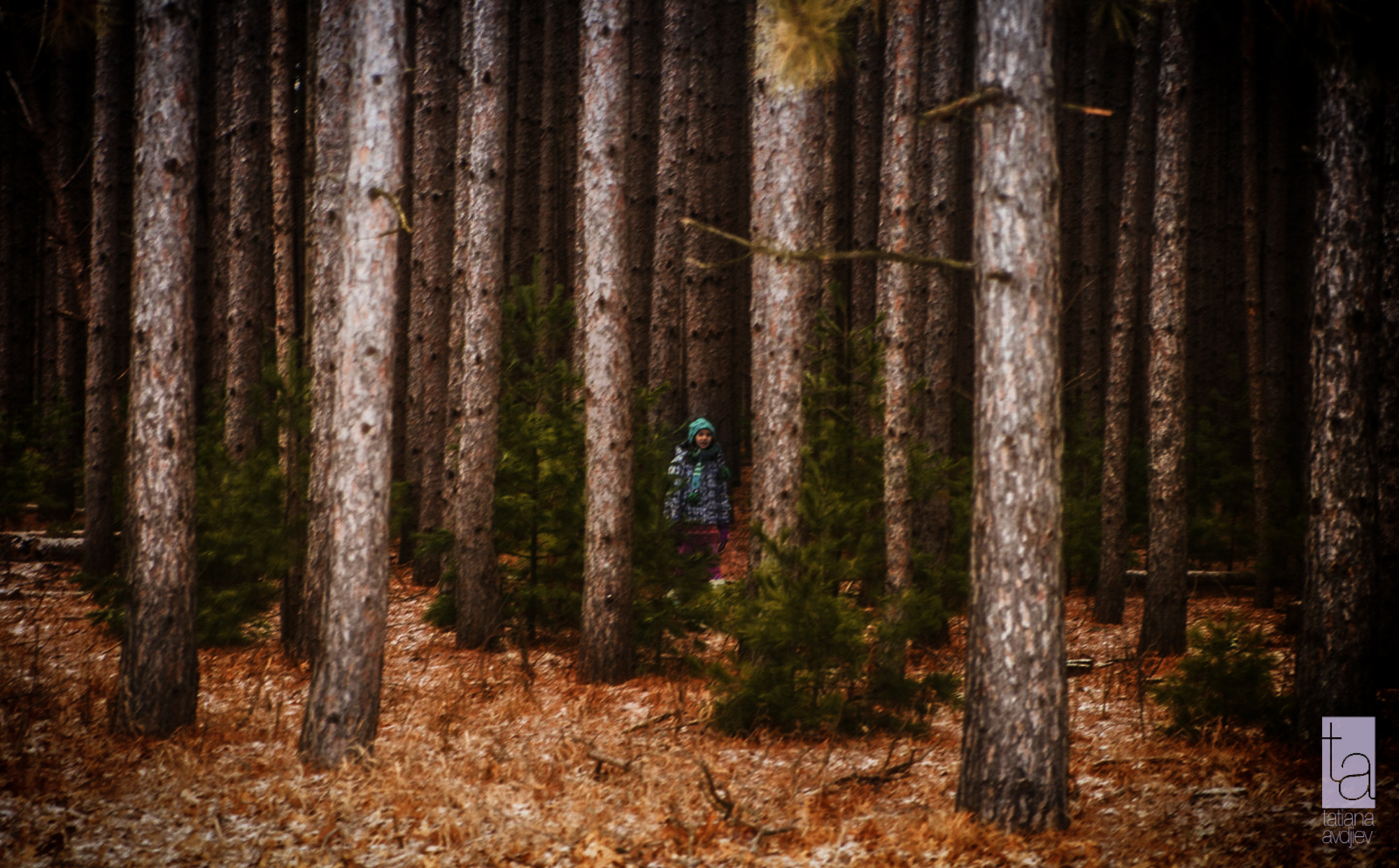 Photograph Deep forest by Tatiana Avdjiev on 500px
