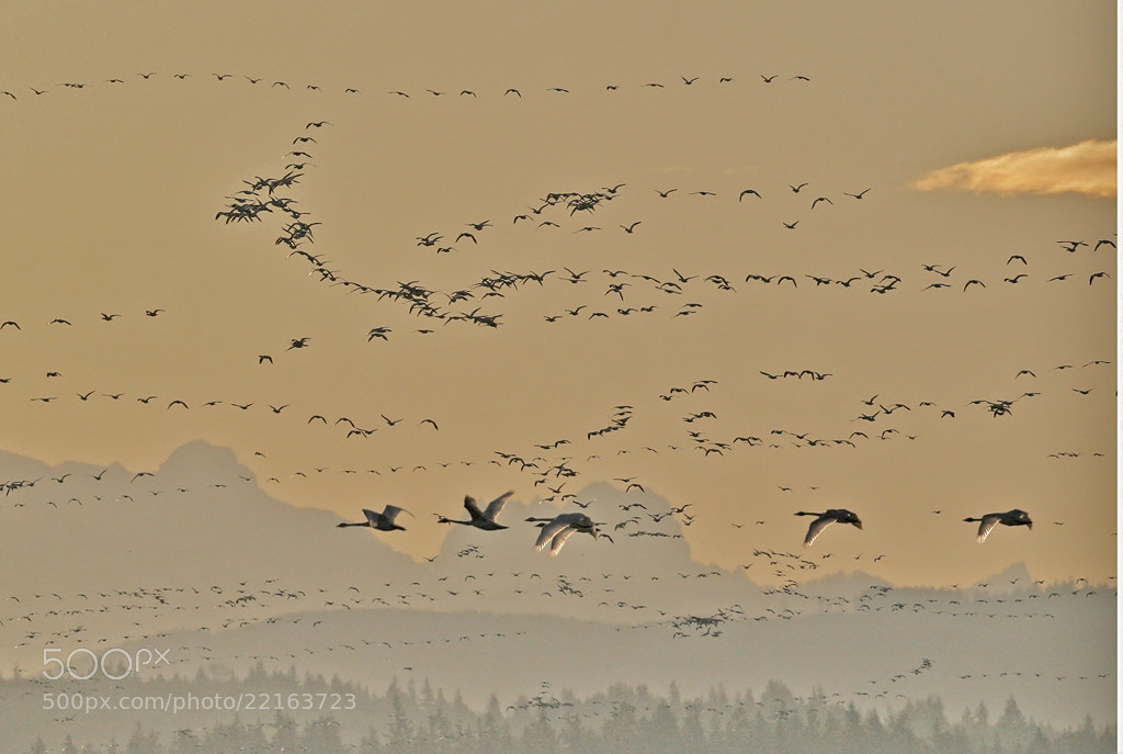 Photograph Winter Sunrise by Duke Coonrad on 500px