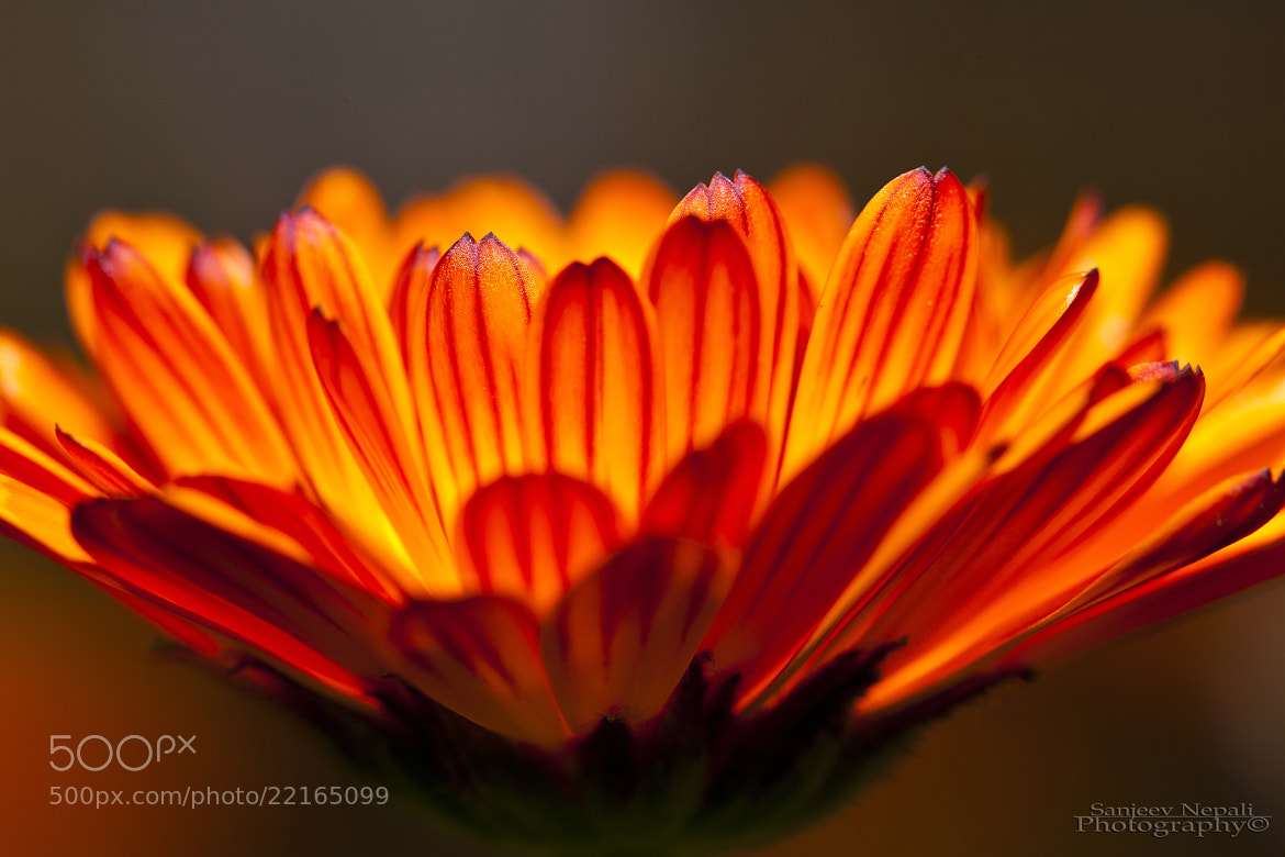 Photograph On fire by Sanjeev Nepali  on 500px