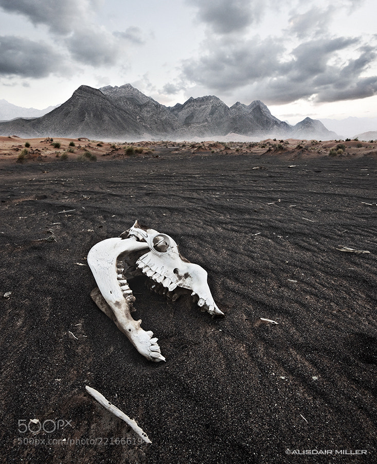 Photograph Jurassic by Alisdair Miller on 500px
