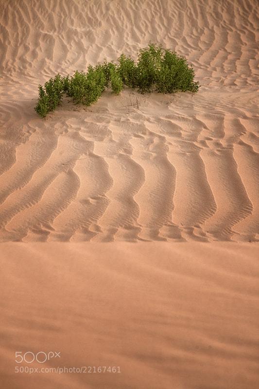 Photograph Untitled by khalfan almansouri on 500px