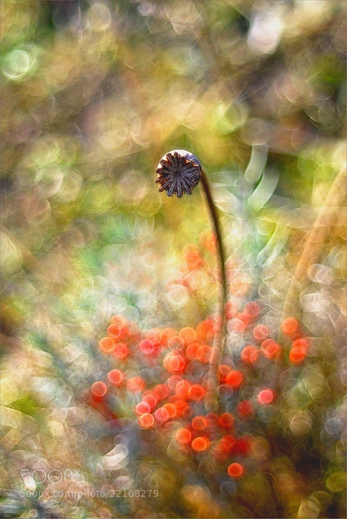 Photograph Power of light by Magda Wasiczek on 500px
