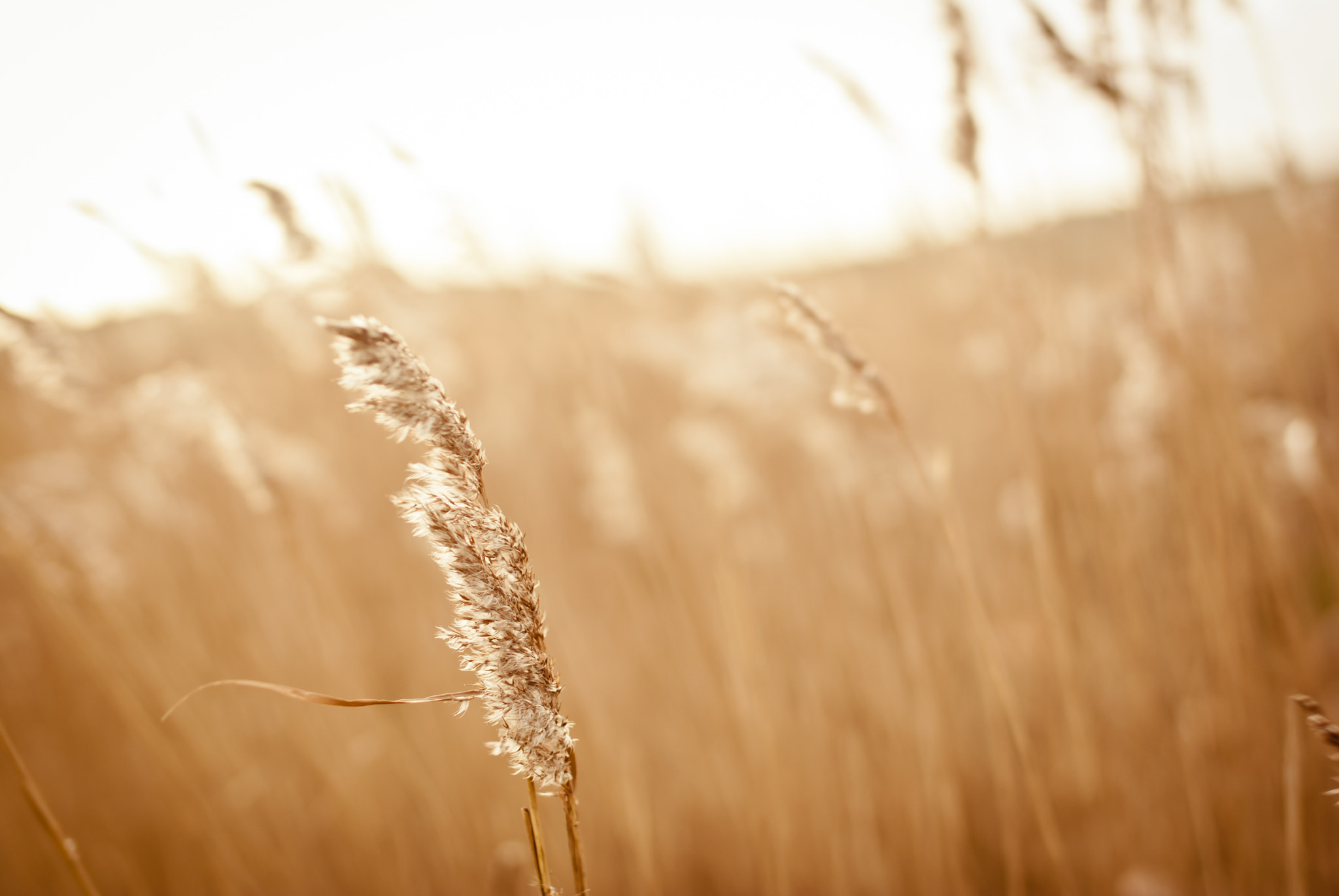 Photograph cereals by Steffi  on 500px