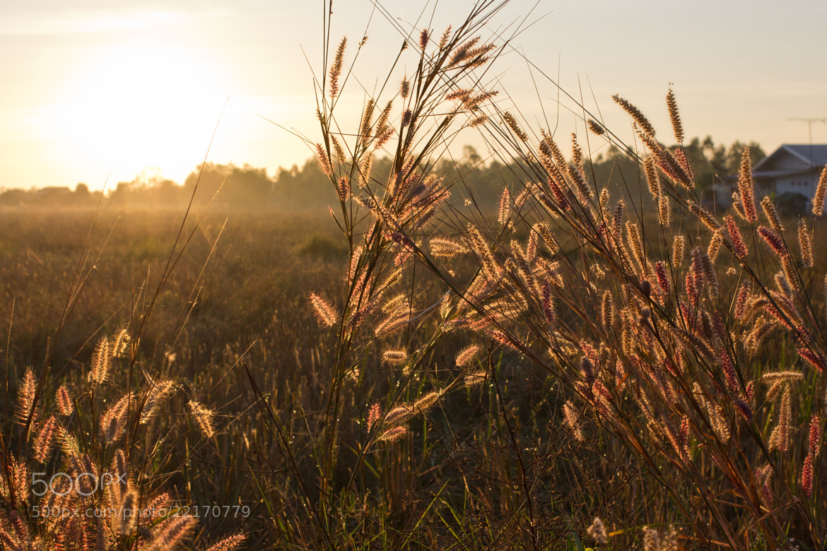 Photograph Grass in Sunday Morning by Songsak Somnate on 500px