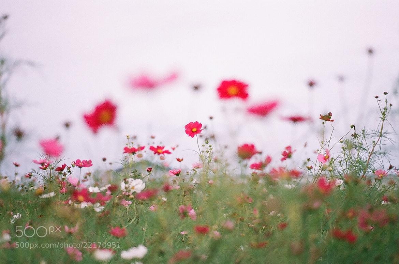 Photograph *** by Ayumi Tsukada on 500px