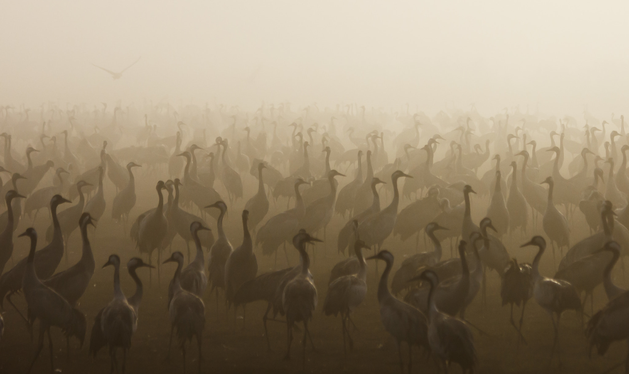Photograph Cranes in the fog by Gilad Hazan on 500px