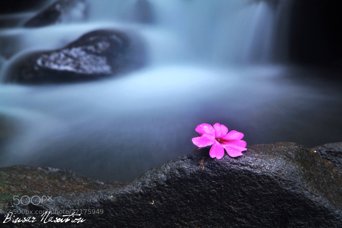 Photograph Lonely Flower by Binsar Nasution on 500px