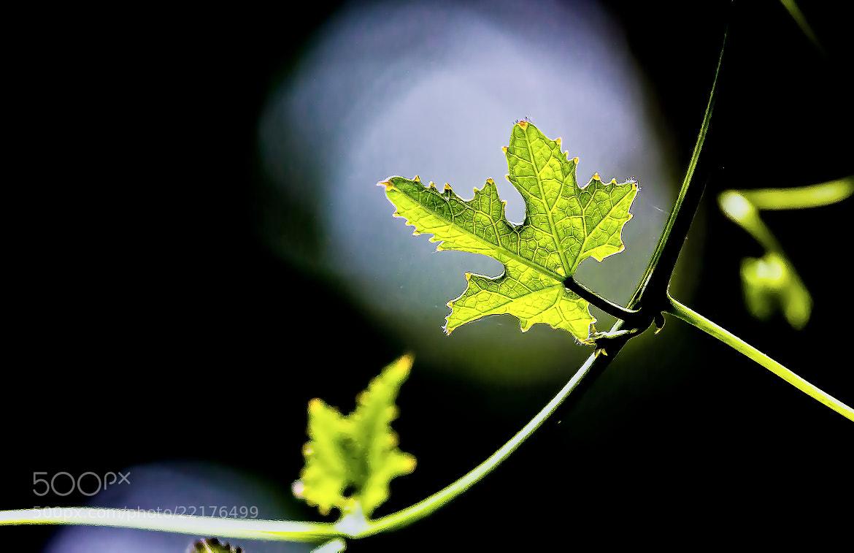 Photograph Leaf by Sreekumar Mahadevan Pillai on 500px