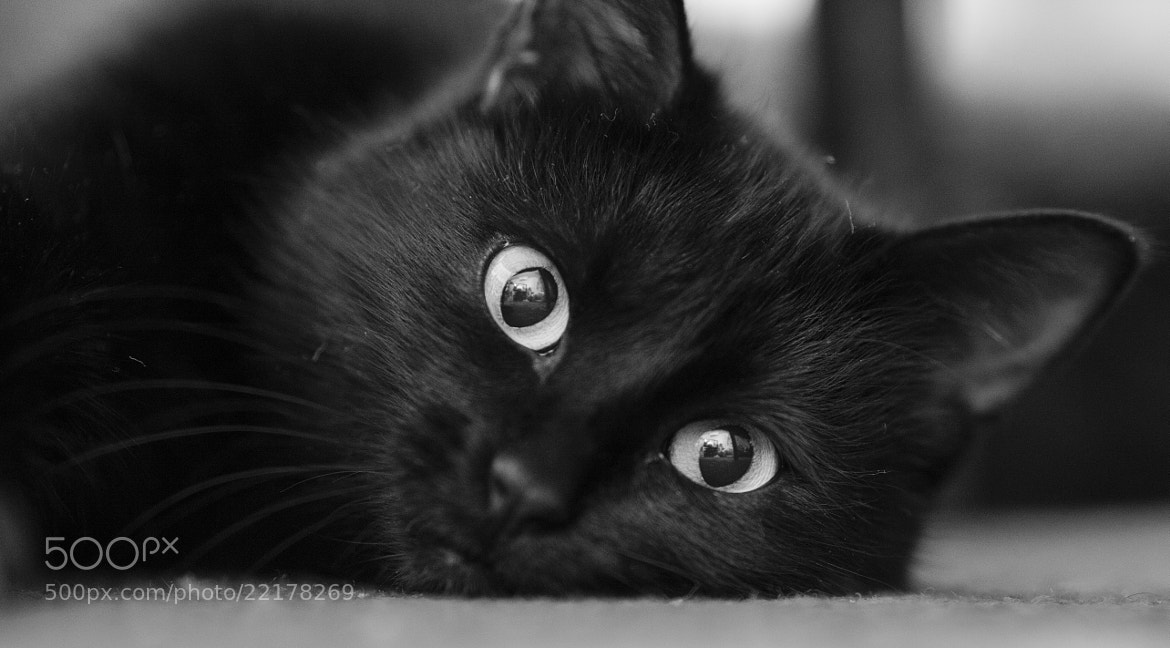 Photograph Watching You by Olesia Mishkina on 500px