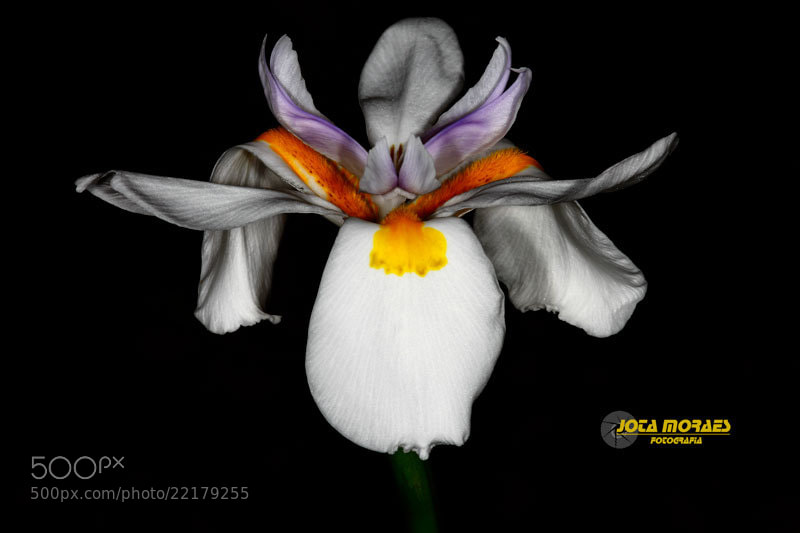Photograph Orquidea in the shadows by jota moraes on 500px