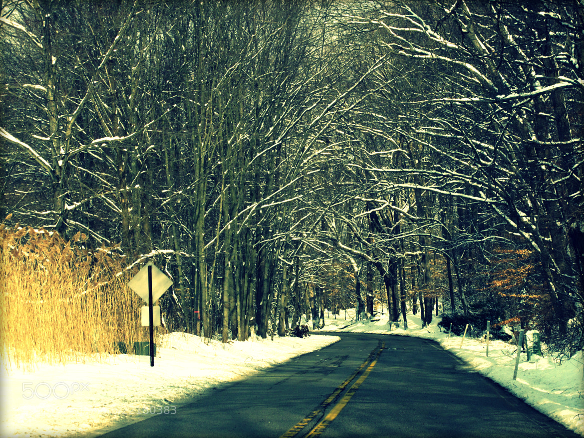 Photograph Snowy Trees by JC Shamrock on 500px