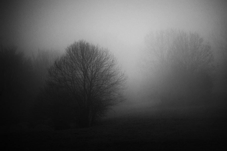 Photograph The fog by Manel Lanzón on 500px