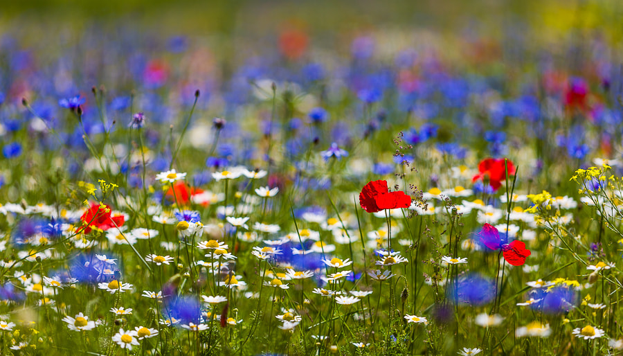 Photograph Flowers in Umbria by Hans Kruse on 500px