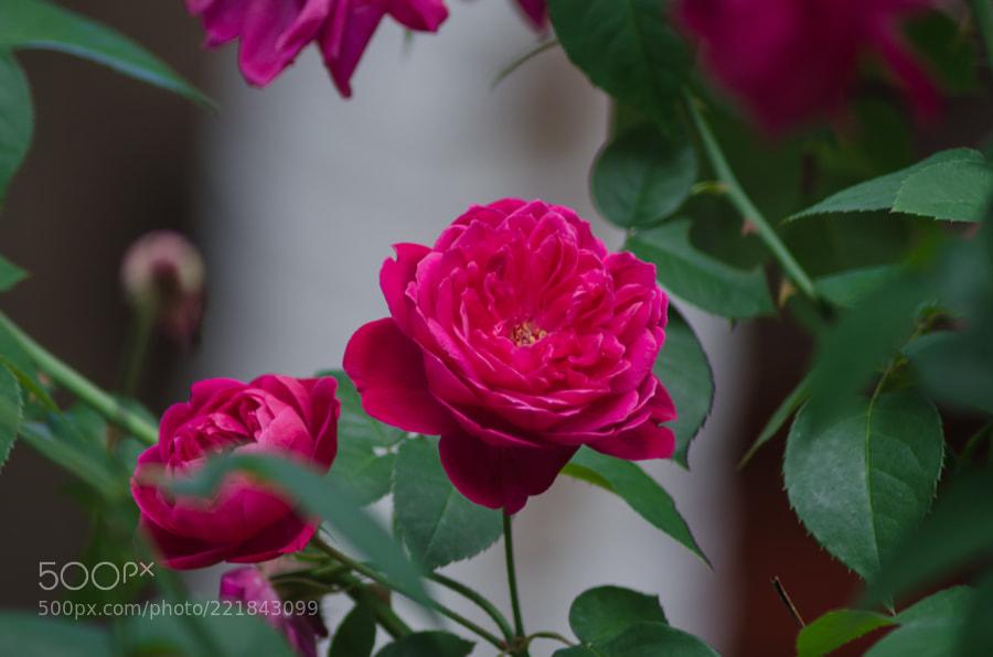 Flores do nosso jardim
